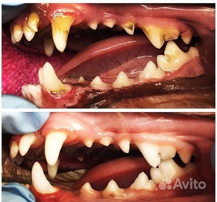 Ультразвуковая чистка зубов собакам купить на Вуёк.ру - фотография № 3