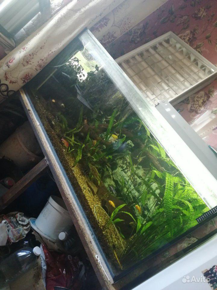 Украшение для аквариума купить на Зозу.ру - фотография № 5