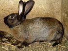 Поменяю крола