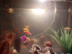 2 аквариума (с рыбами и аксессуарами)
