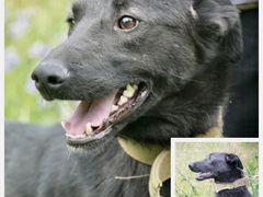 Агат- Собака для вашей охраны