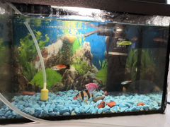 Аквариум 10л с рыбками