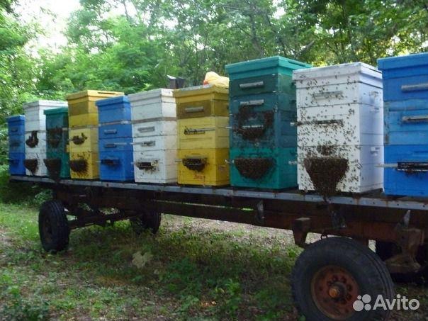 Пап Год куплю пчелку электро в усть каменогорске свежие новости