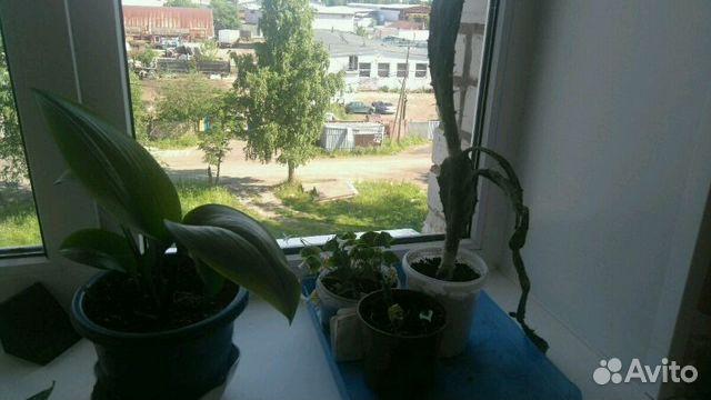 Авито комнатные цветы петрозаводск