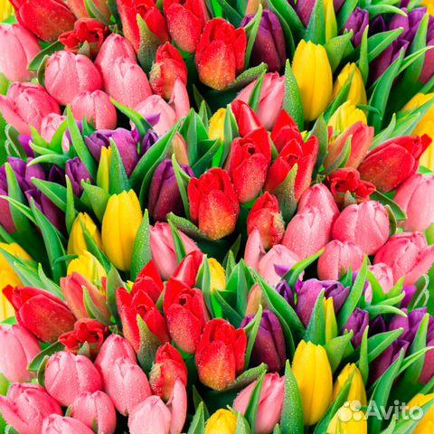 Купить тюльпаны оптом от производителя заказать доставку цветов с макарони в коробке