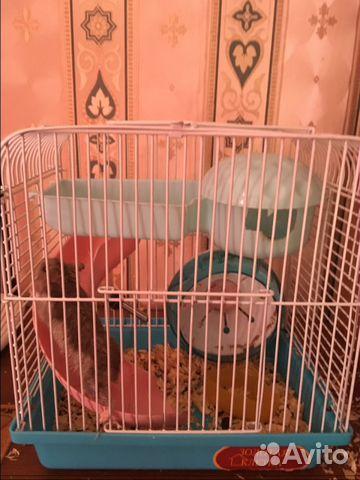 Sell hamster