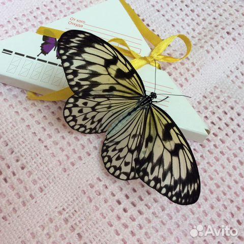 Открытки с живой бабочкой