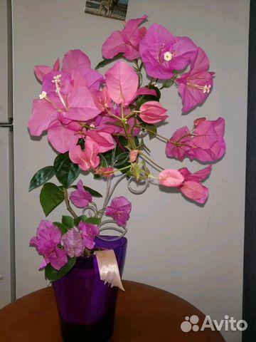 Beautiful blooming flower bougainvillea