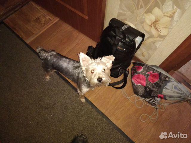Отдам собаку в хорошие руки бесплатно купить на Зозу.ру - фотография № 5
