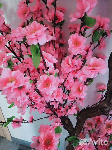 Дерево сакура купить 3