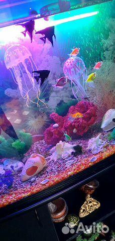 Коралл для аквариума купить 7
