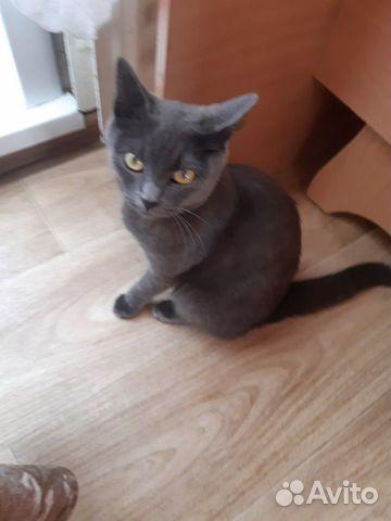 Найдена кошка  89526219380 купить 1