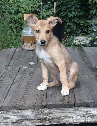 Собака  89033046855 купить 1