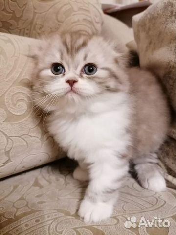 Очаровательные котята  89132492220 купить 6