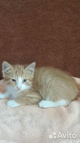 Котенок (мальчик)  89625017534 купить 3
