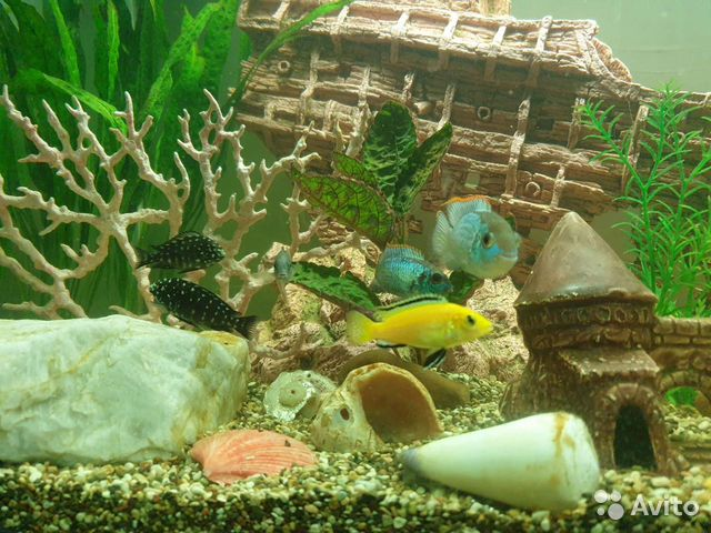 Аквариум с рыбками и декорациями  89196043887 купить 2