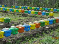 Пчеломатки карника от производителя 2019