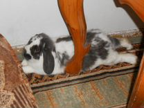 Отдам в хорошие руки кролика бесплатно