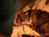 Кошечка Бемби