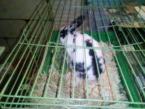 Кролик декоративные 2 штуки с клеткой