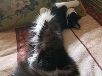 Кот и кошка в добрые руки