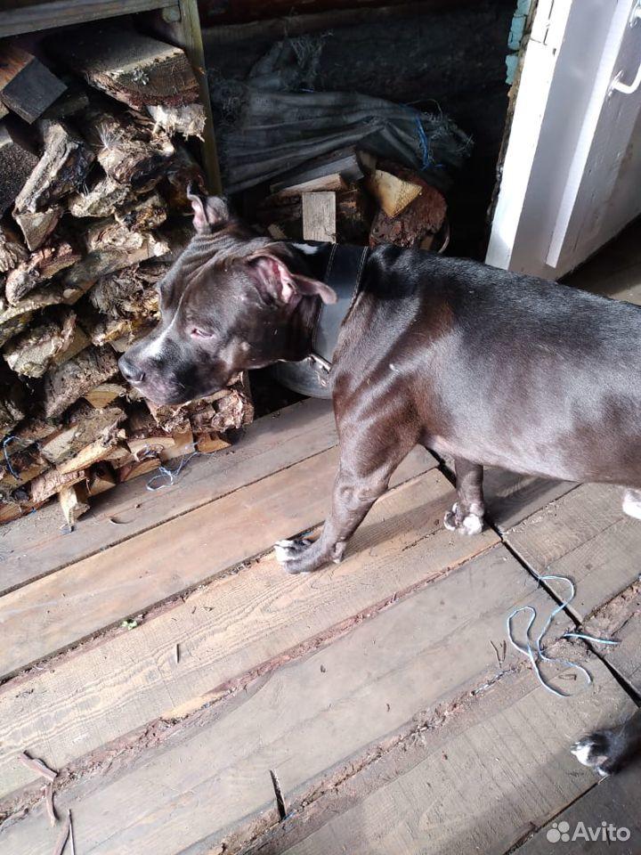 Dog  89249940840 buy 1