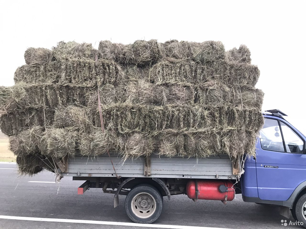 Сено разнотравье и кукурузное доставкой  89681113511 купить 2