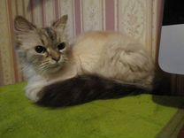 Нашлась персидская кошечка