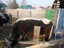 Продам двух бычков и телочка