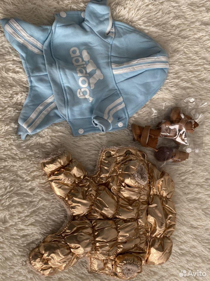 Одежда для собак  89506762401 купить 10